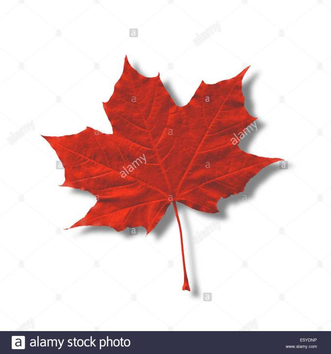 How Long Has The Maple Leaf Been A Symbol Of Canada Zoshwiki