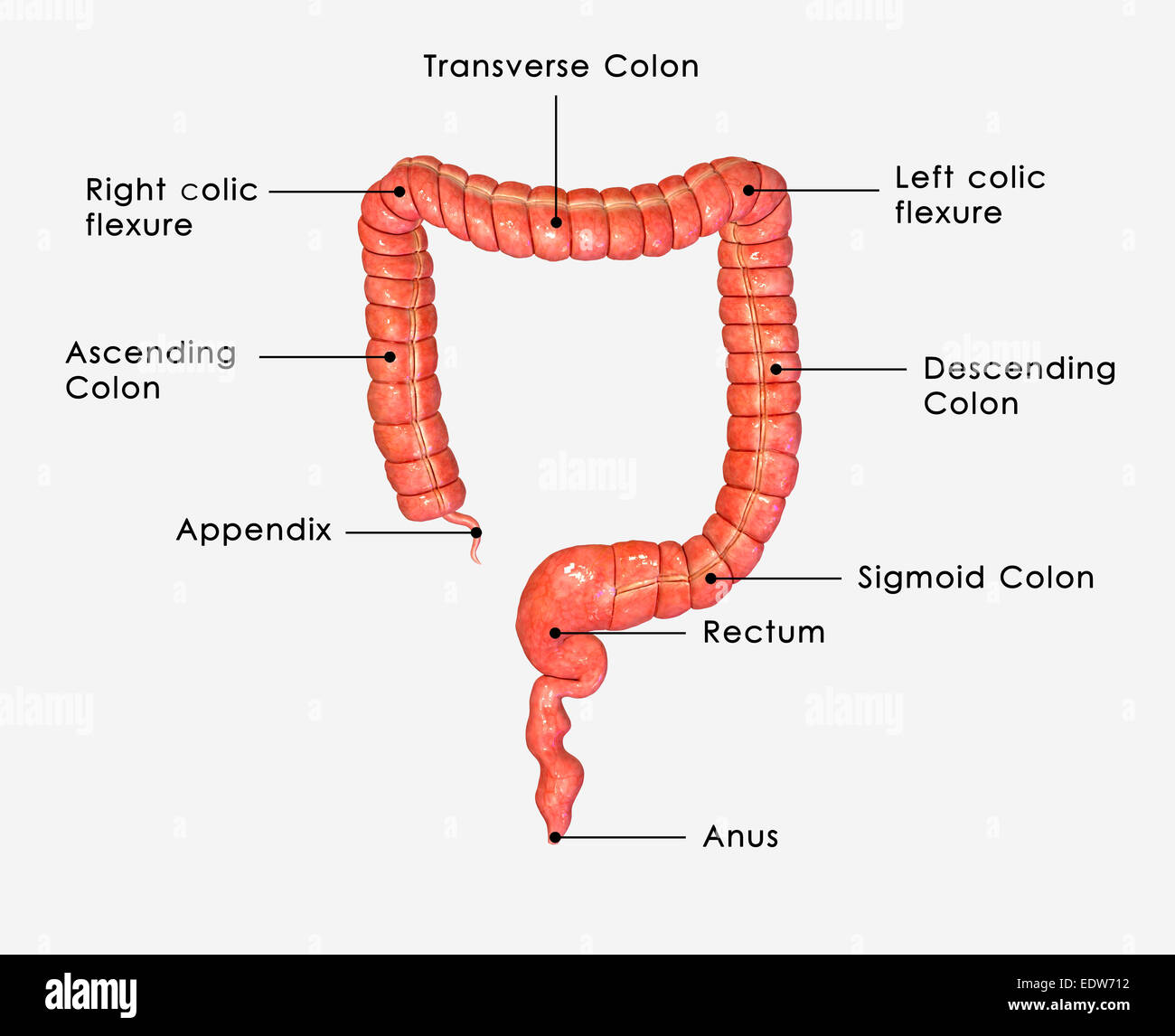 Small And Large Intestine Diagram