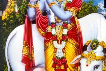 Lord Krishna With Cow Hd Wallpapers Lord Shri Krishna Hd Wallpapers