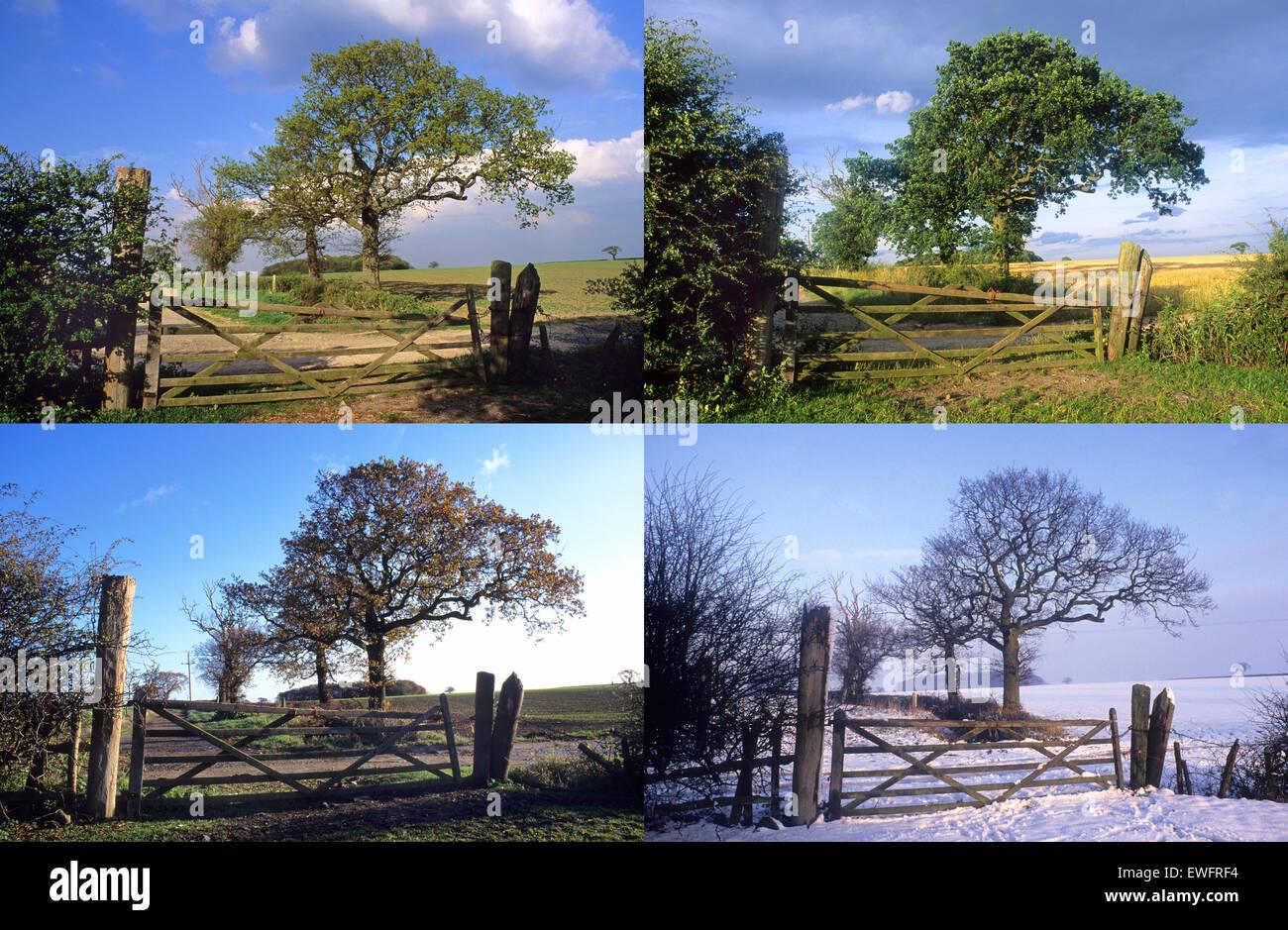 Four Seasons Taken In The Same Location Through Spring