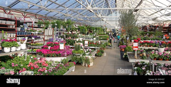 interior of commercial plant and flower garden center shop stock