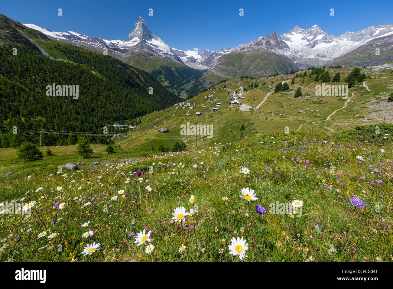 Flowers Mountains Alpine Switzerland Stock Photos   Flowers     Flowers Mountains Alpine Switzerland Stock Photos and Images