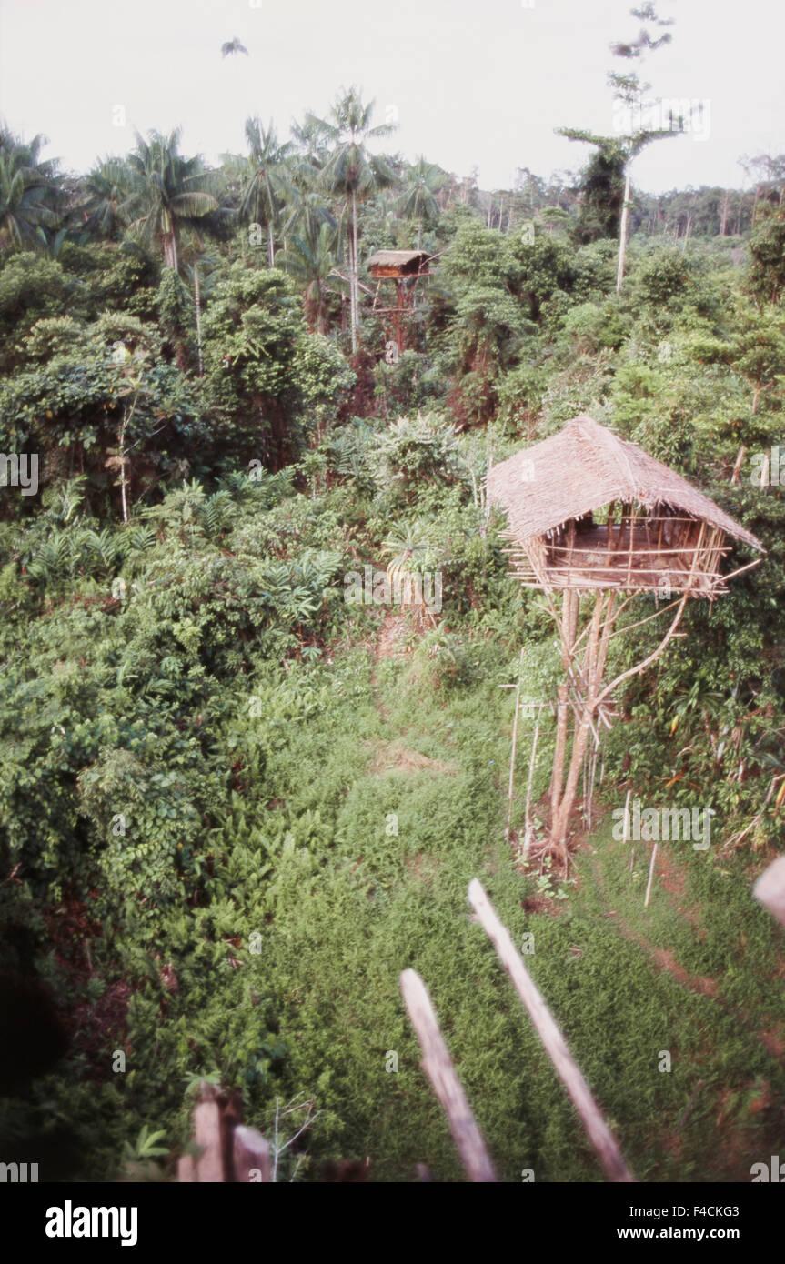 Indonesia Irian Jaya Korowai Tree House In Forest Large Format Stock Photo Alamy