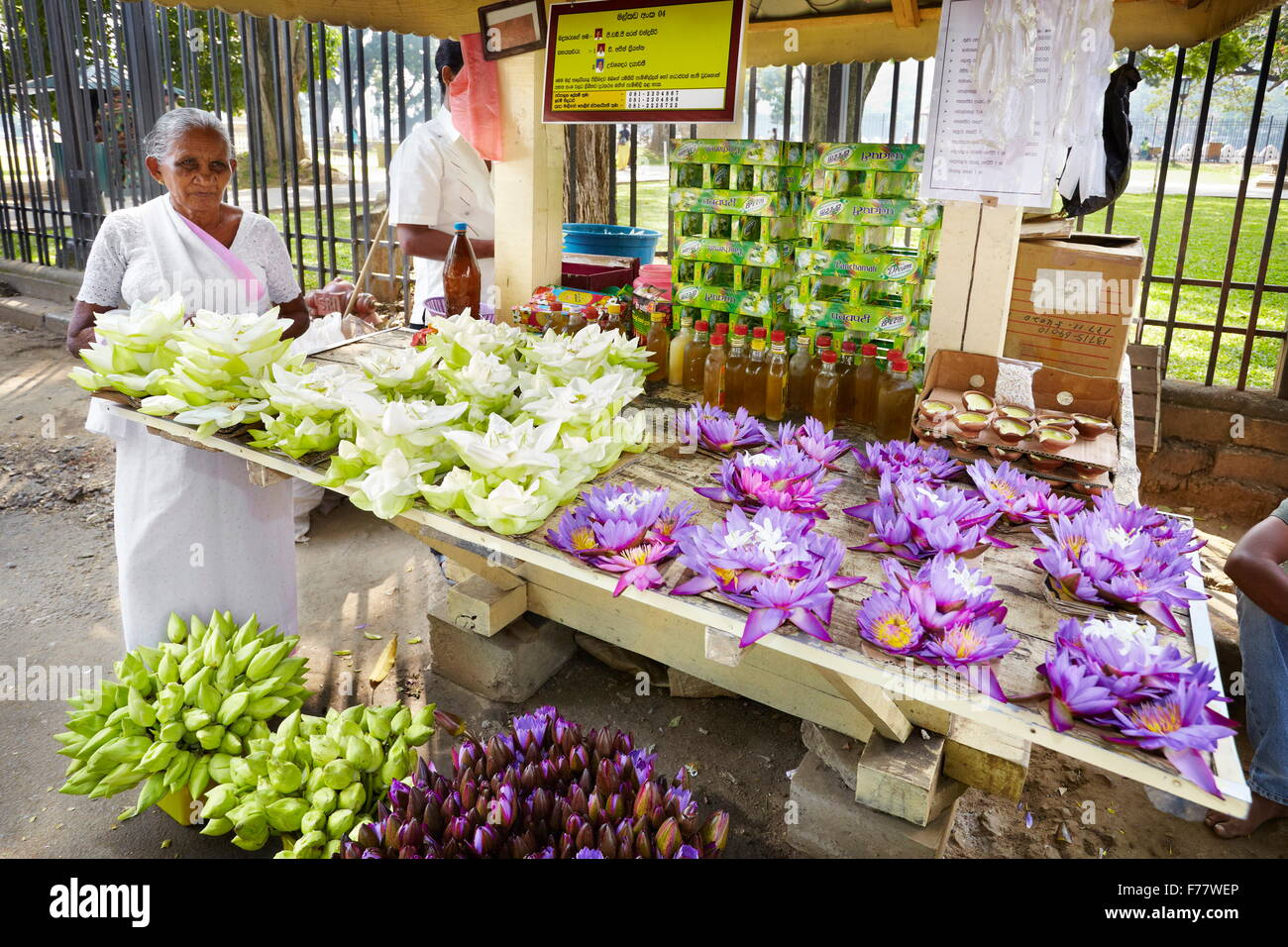 Where Buy Fresh Lotus Flowers