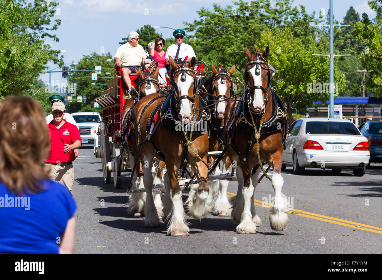 Clydesdale Horses Seaworld