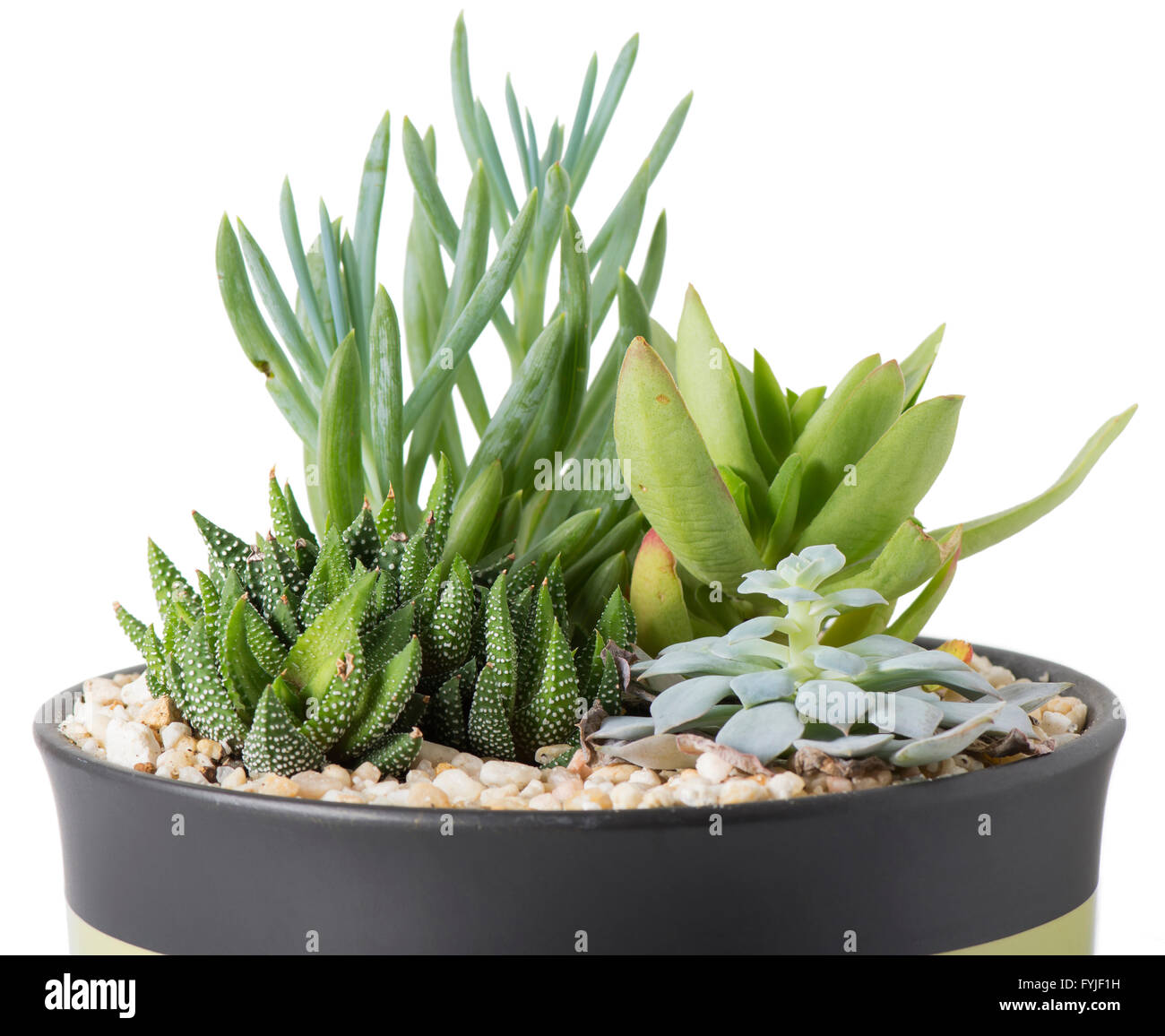 Indoor Plant Garden With Succulent Plants In A Pot With