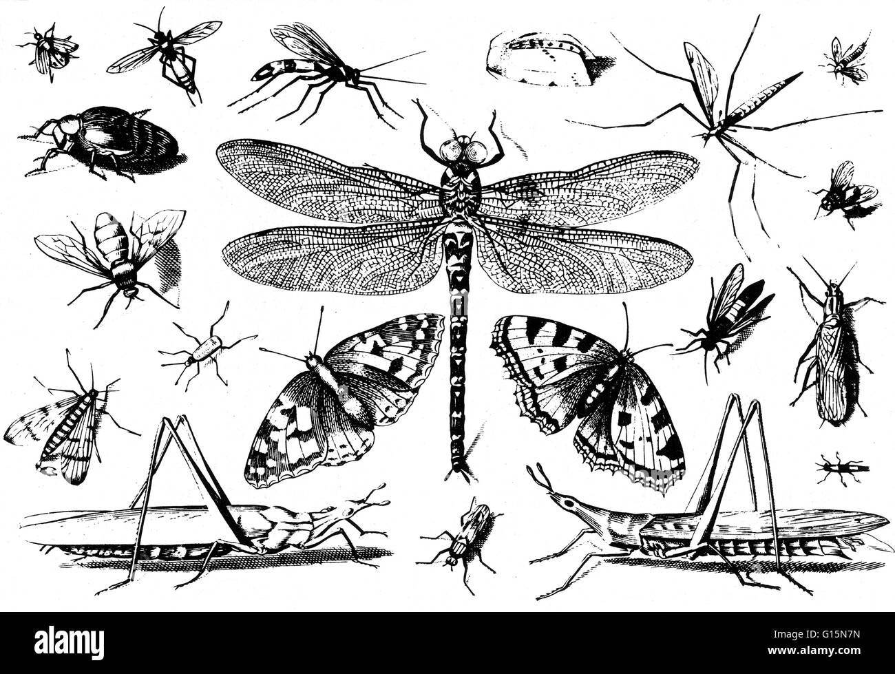 Insects Jacob Hoefnagel Engraving From George Hoefnagel S