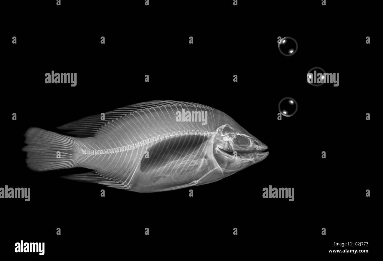 Fish Skeleton Stock Photos Amp Fish Skeleton Stock Images