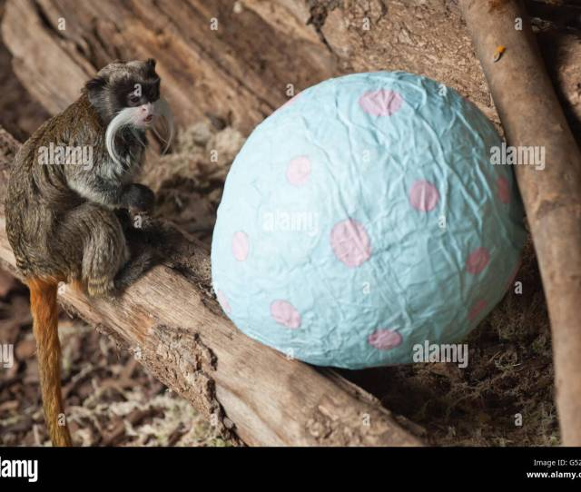 Easter Treats For Zoo Animals