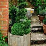 Topiary Spiral Box Buxus In Need Of Trimming Miw251798 Stock Photo Alamy