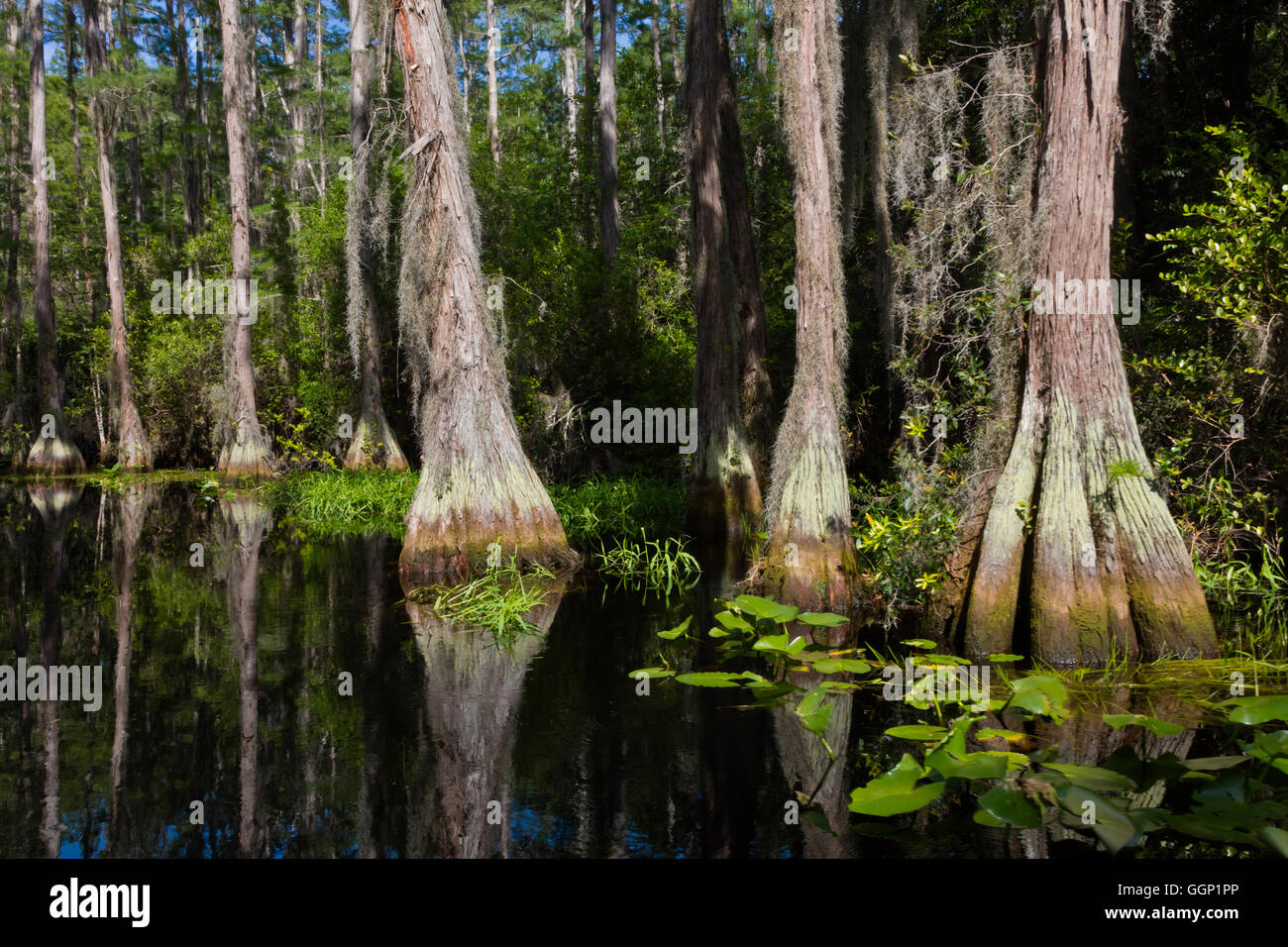Okefenokee Swamp Facts For Kids