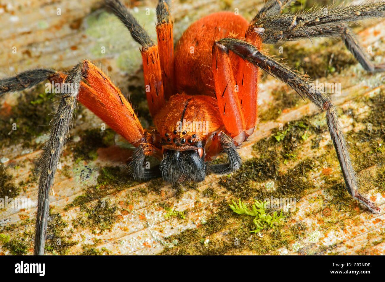 Arachnids Habitat