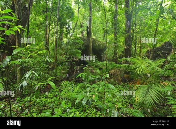 Daintree Regenwald Australien Queensland Mossman Gorge