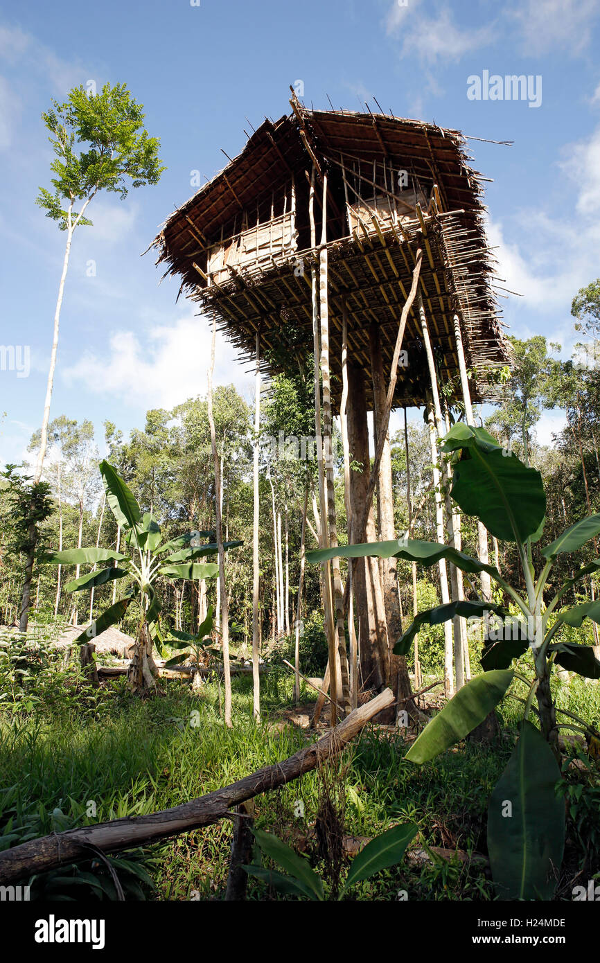 Image result for Rainforest treetop houses