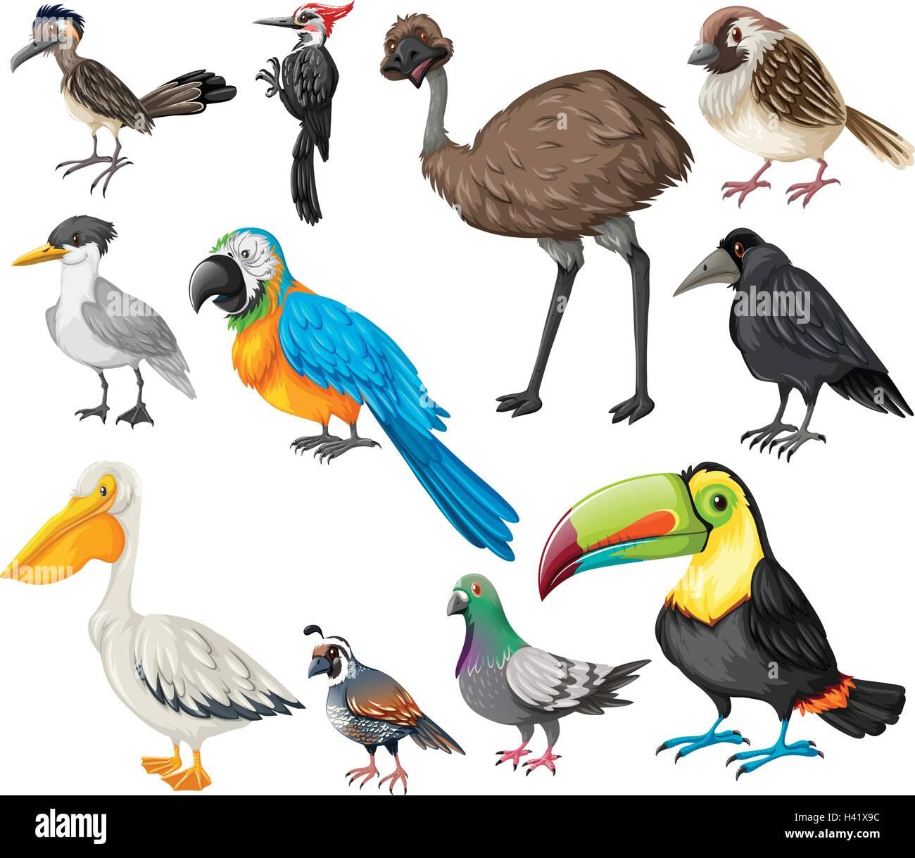 Different Types Of Wild Birds Illustration Stock Vector