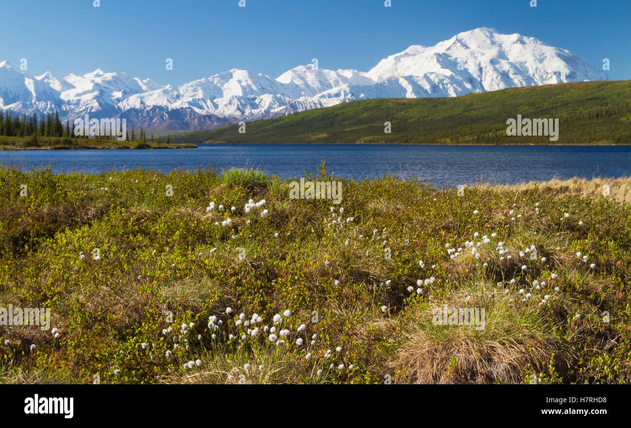 Denali National Park and Preserve in interior Alaska in summertime     Denali National Park and Preserve in interior Alaska in summertime  Mount  McKinley and Alaska Range with blue pond in foreground