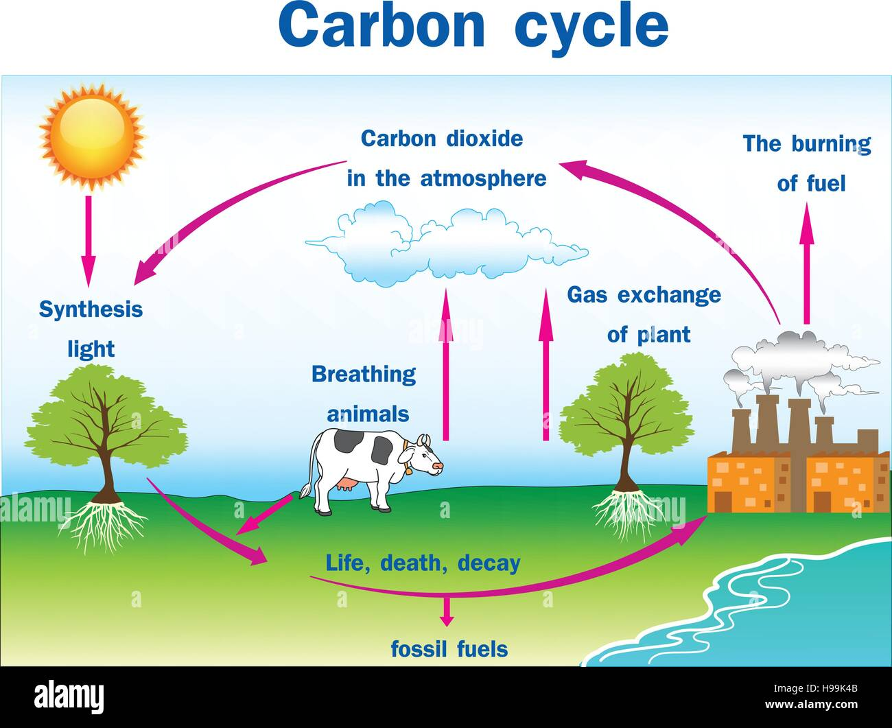 Vector Illustration Of Carbon Cycle Stock Vector Art Amp Illustration Vector Image