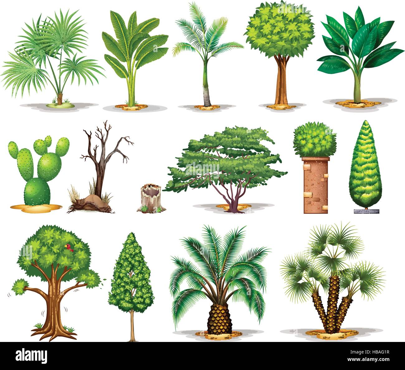 Different Types Of Trees Illustration Stock Vector Image