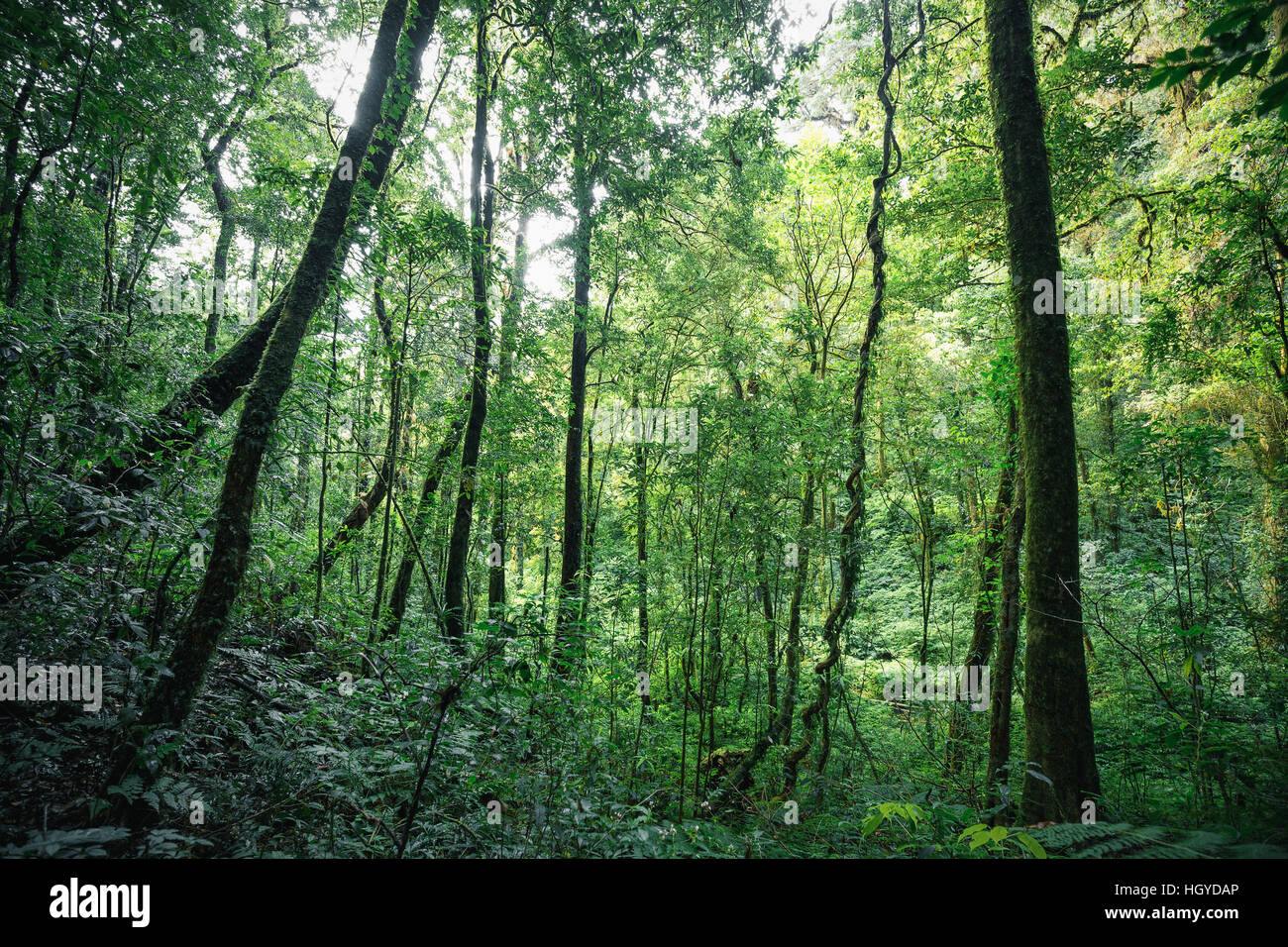 The current market favors stock pickers.amrn in some market the best approach is to trade the indices, and in some markets the best approach is to trade individual stocks. Green Trees Inside Tropical Evergreen Forest In Of Thailand Stock Photo Alamy
