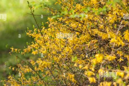 Blue flowers 2018 tree with small yellow flowers blue flowers tree with small yellow flowers the flowers are very beautiful here we provide a collections of various pictures of beautiful flowers charming mightylinksfo