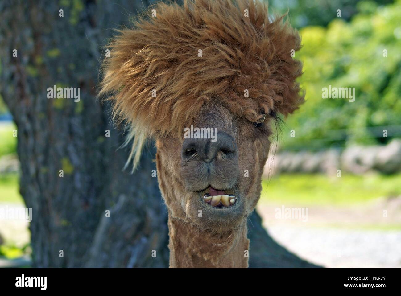 Matted Hair Stock Photos Amp Matted Hair Stock Images