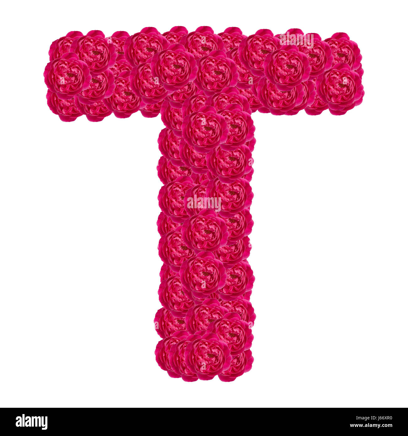 Letter T Alphabet With Damask Rose Abc Concept Type As
