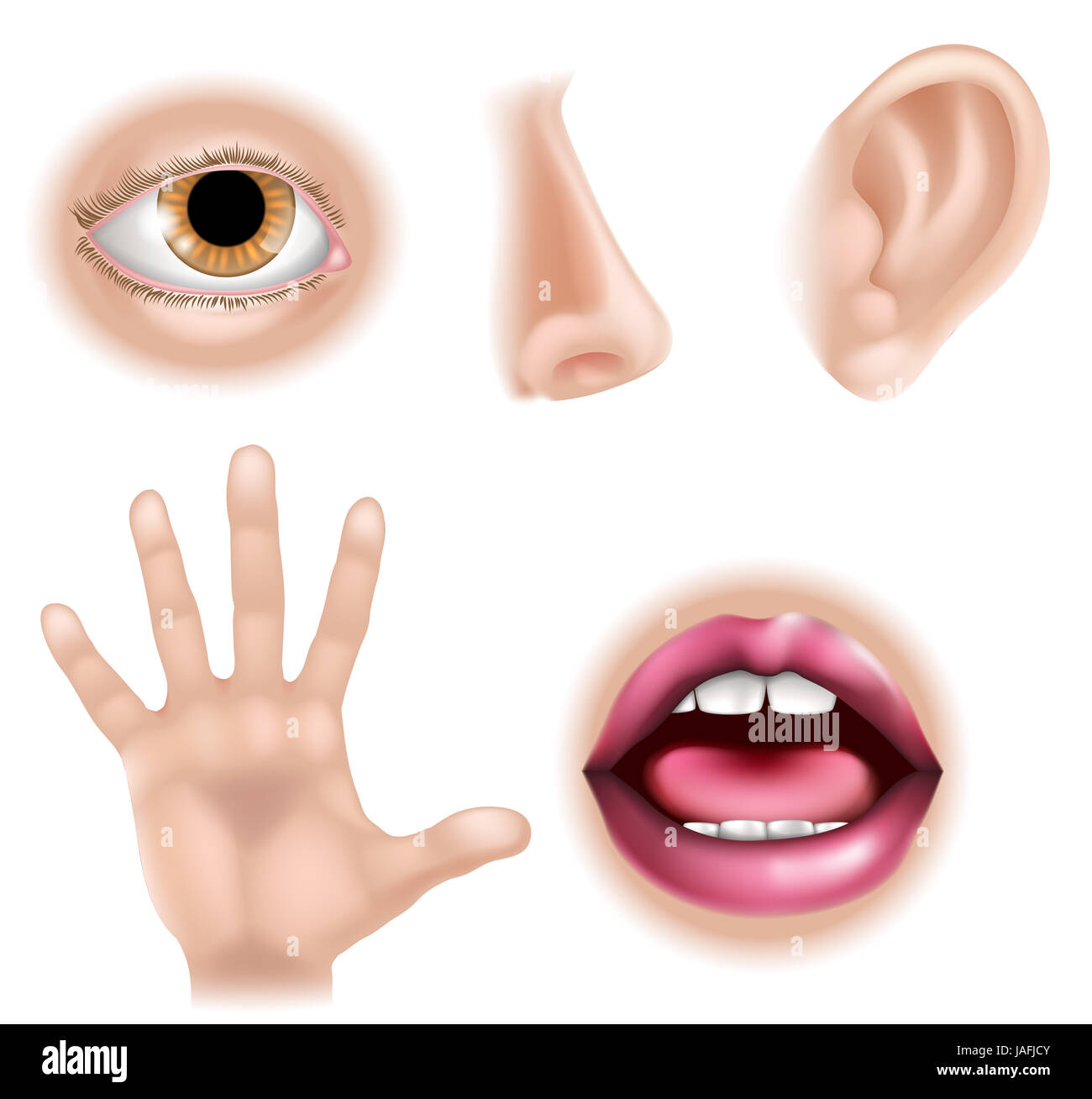 Five Senses Illustrations With Hand For Touch Eye For