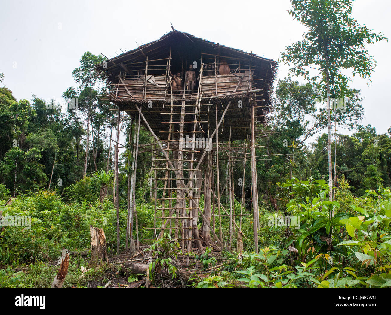 Korowai Tribe High Resolution Stock Photography And Images Alamy