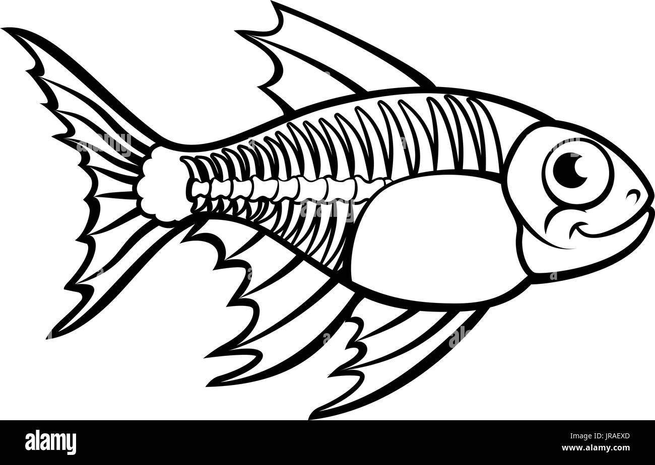 Cartoon X Ray Fish Stock Photos Amp Cartoon X Ray Fish Stock