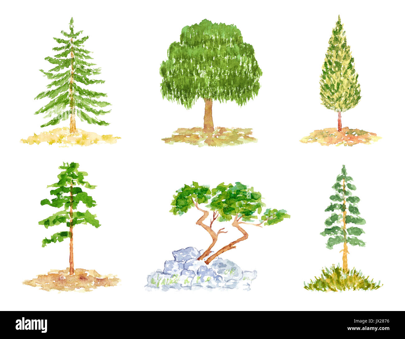 A group of deciduous conifers. Set Of Cute Deciduous And Coniferous Trees Watercolor Hand Drawn And Painted Isolated On White Stock Photo Alamy