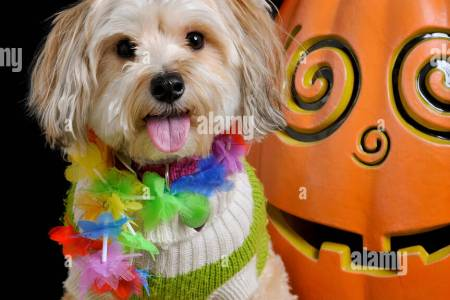 halloween costumes for small dogs halloween costumes cute