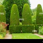 English Garden With Row Of High Conical Shaped Topiary Hedges Of Yew Stock Photo Alamy