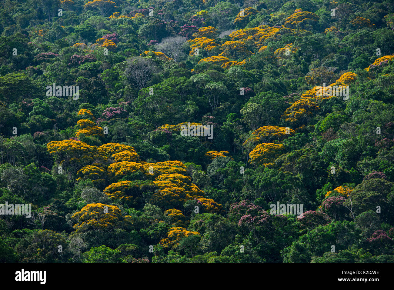Tropical Rainforest Canopy Layer Amp Dense Canopy Layer Above