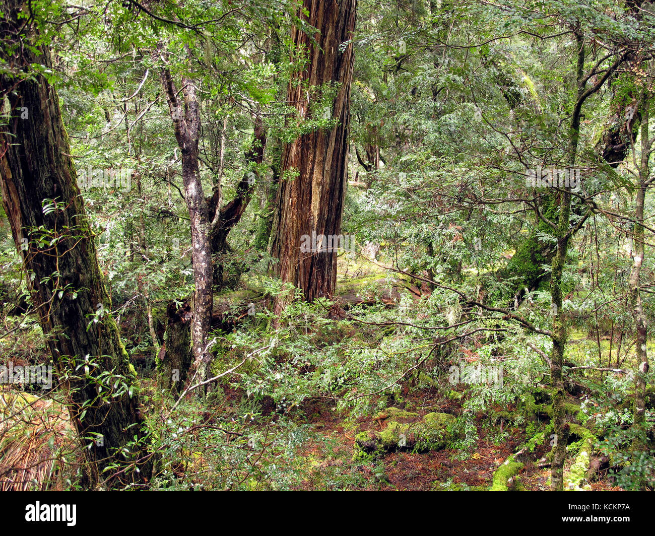 2 climate influences the structure and function of forest. Temperate Evergreen Forest Mountain High Resolution Stock Photography And Images Alamy
