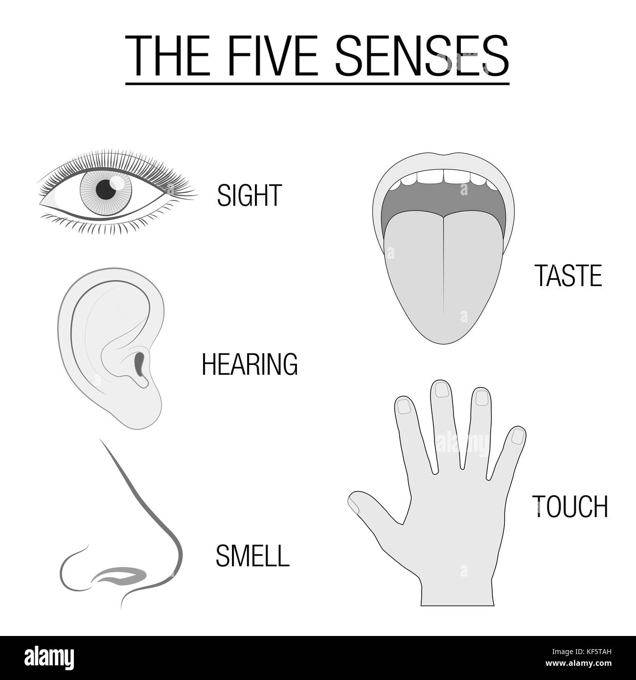 Five Senses Cut Out Stock Images Amp Pictures