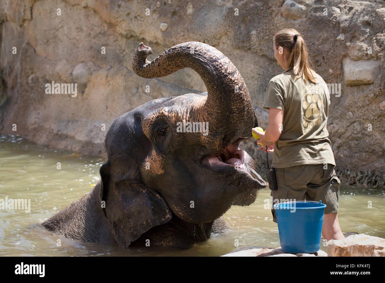 Female Zoo Keeper Stock Photos Amp Female Zoo Keeper Stock