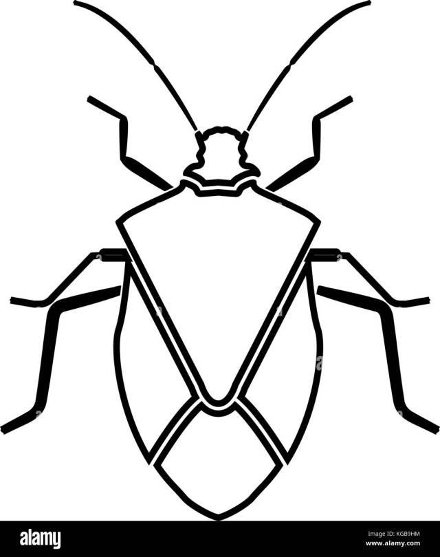 Stink Bug Black and White Stock Photos & Images - Alamy