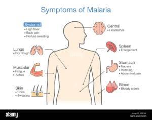 Malaria Patient Stock Photos & Malaria Patient Stock
