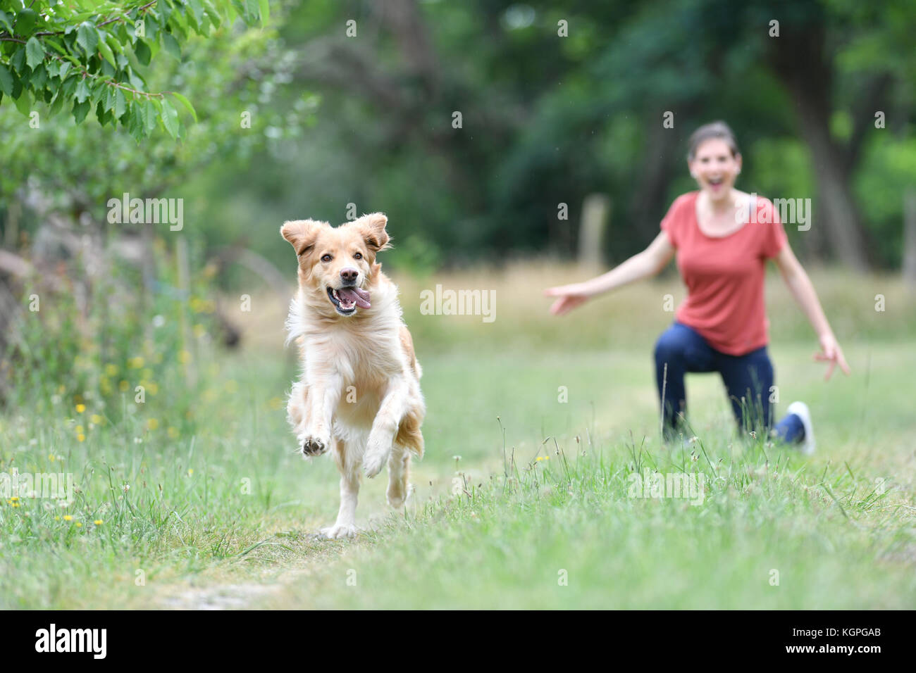 Dog Frisbee Stock Photos & Dog Frisbee Stock Images
