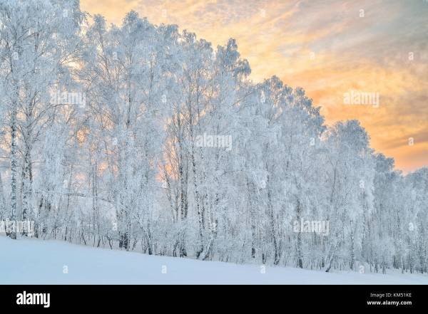Birch With Hoarfrost Stock Photos & Birch With Hoarfrost ...