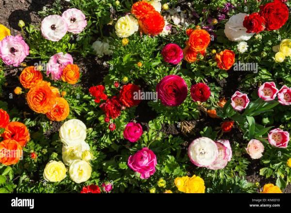 purple and orange flower garden Garden Flower Bed Designs Stock Photos & Garden Flower Bed