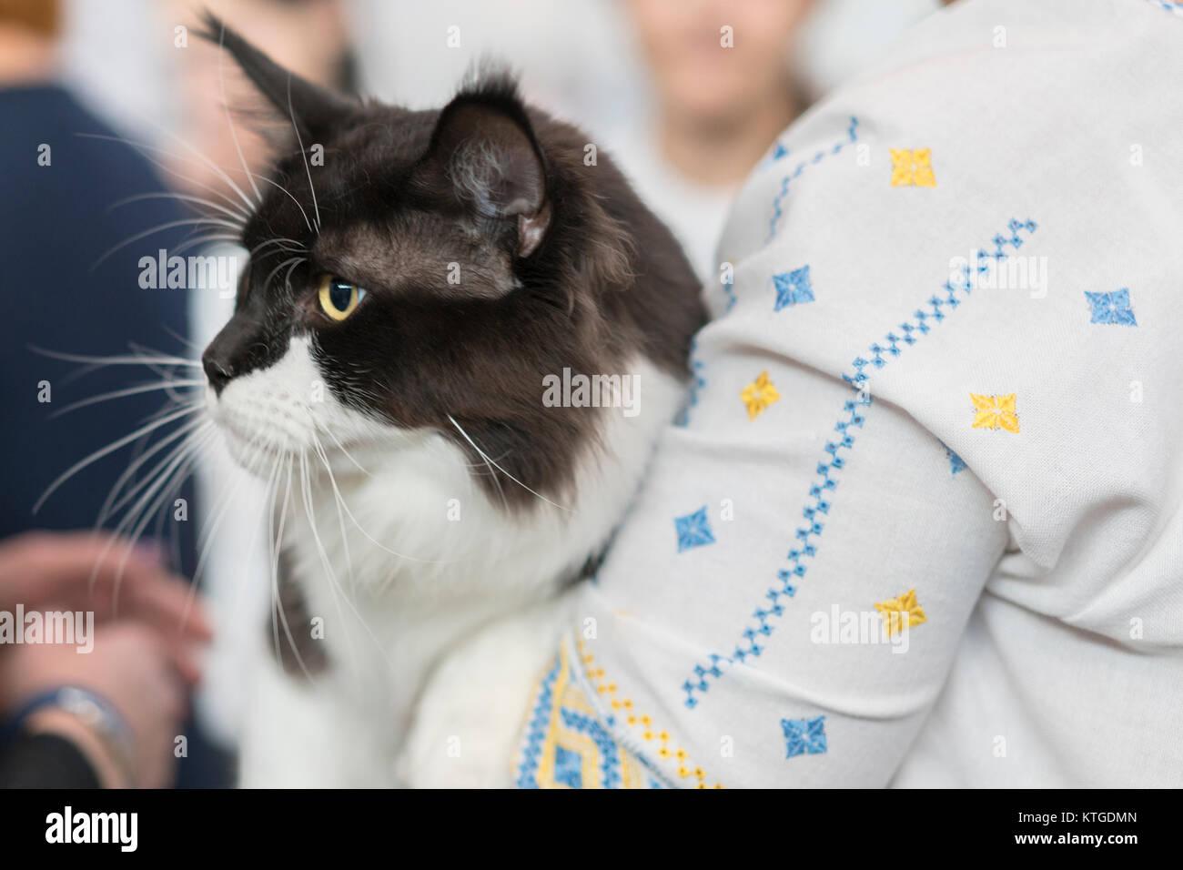 Senior Woman Pet Cat Sitting Stock Photos Amp Senior Woman Pet Cat Sitting Stock Images