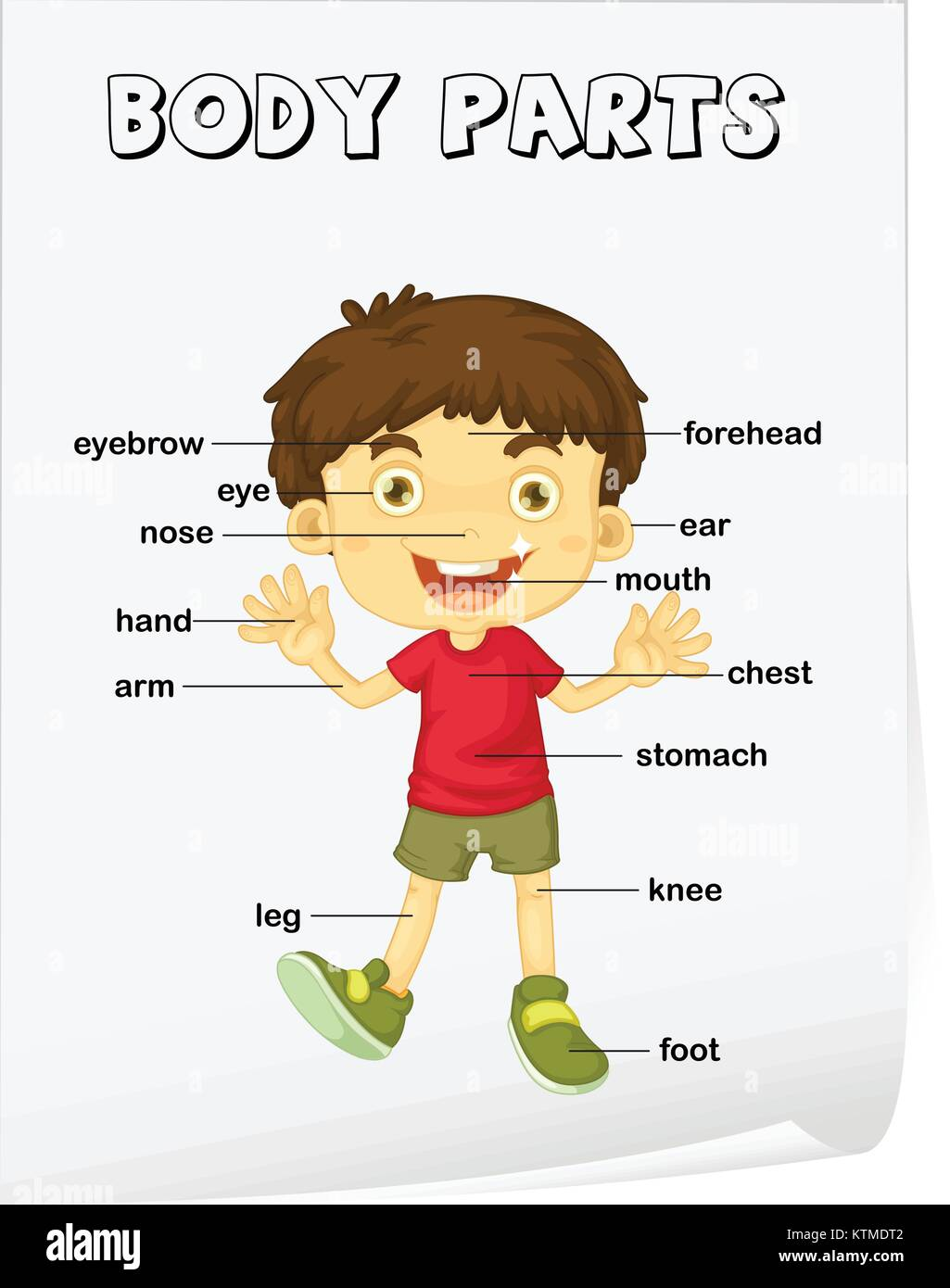 Body Parts Images Worksheet