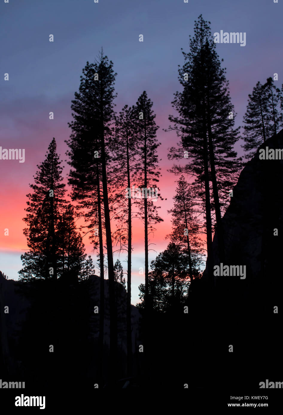 Northern Lights Pine Cones