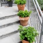 Green Plants In Pots Outdoor On The Summer Patio Small Townhouse Perennial Summer Garden Vienna Austria Stock Photo Alamy