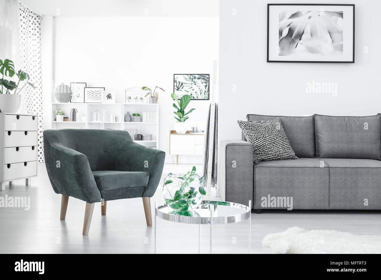 https www alamy com open space white living room interior with fresh plants posters grey couch and green armchair image181869075 html