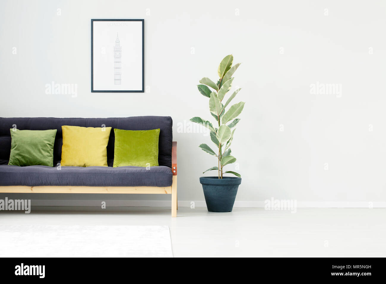 Ficus Tree Next To Black Sofa With Green And Yellow Pillow In Living Room Interior With Poster And Copy Space Stock Photo Alamy