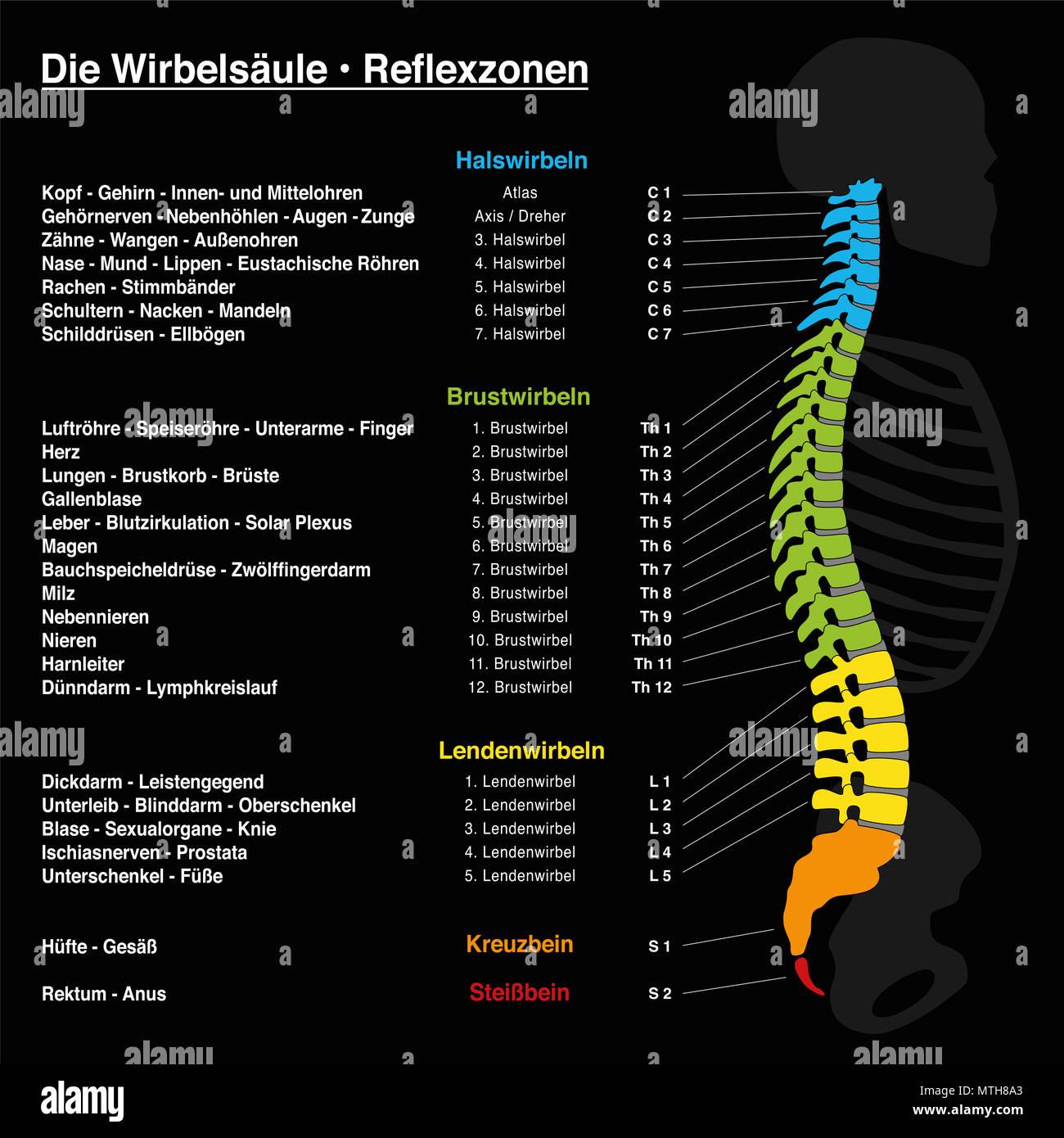Spine Reflexology With Description Of The Corresponding