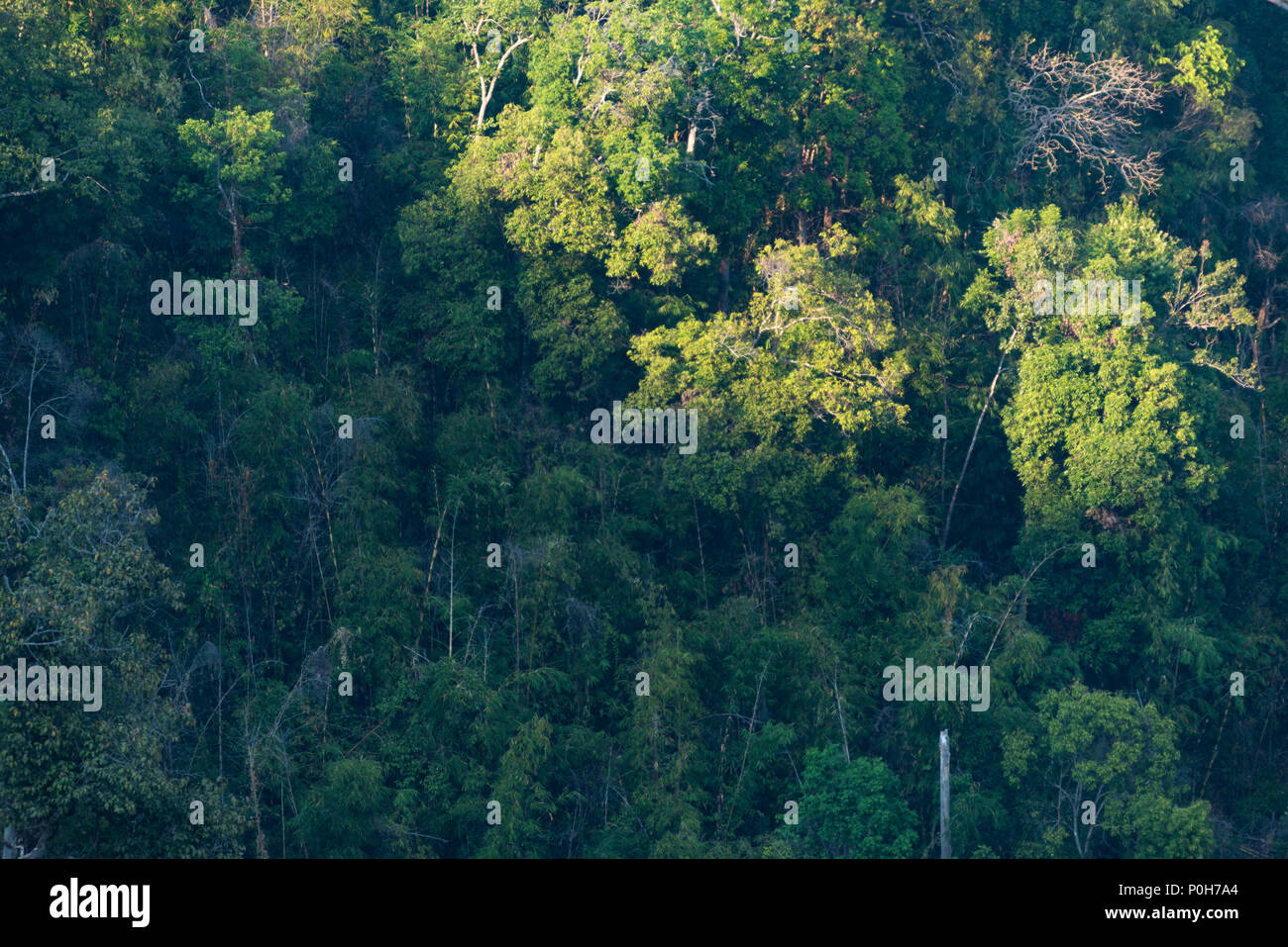 Select from premium tropical evergreen forest of the highest quality. The Atmosphere Of Tropical Evergreen Forest In The Evening With The Sun Light Stock Photo Alamy
