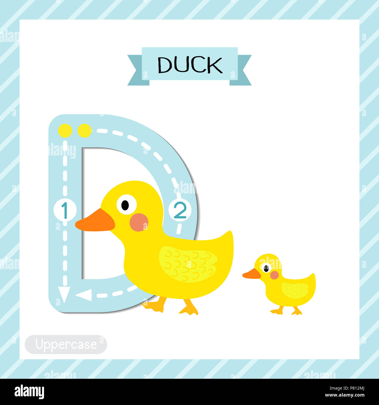 Letter D Uppercase Cute Children Colorful Zoo And Animals Abc Alphabet Tracing Flashcard Of Duck